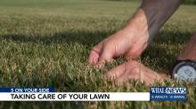IMAGE: Now is the time to assess your yard and yard service