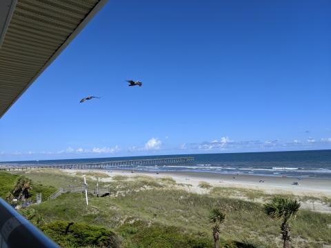 Ocean Isle Beach and pelican view from the porch in the room