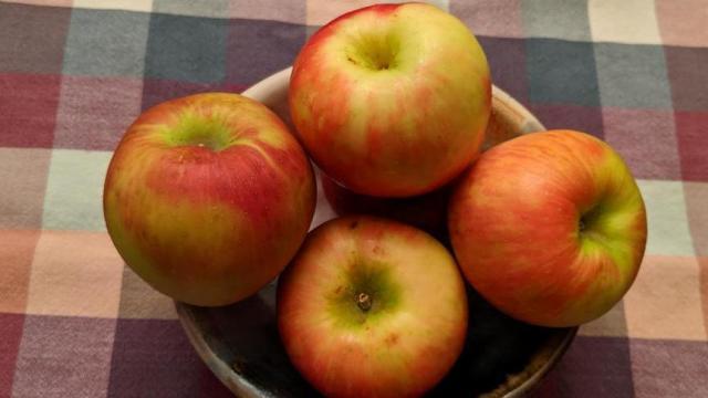 Honeycrisp Apples (photo: Faye Prosser)