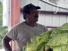 Migrant worker, farm worker, tobacco farm