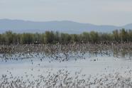 IMAGE: Wetland Rentals for Migrating Birds