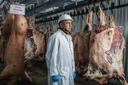 IMAGES: At Hamburger Central, Antibiotics for Cattle That Aren't Sick