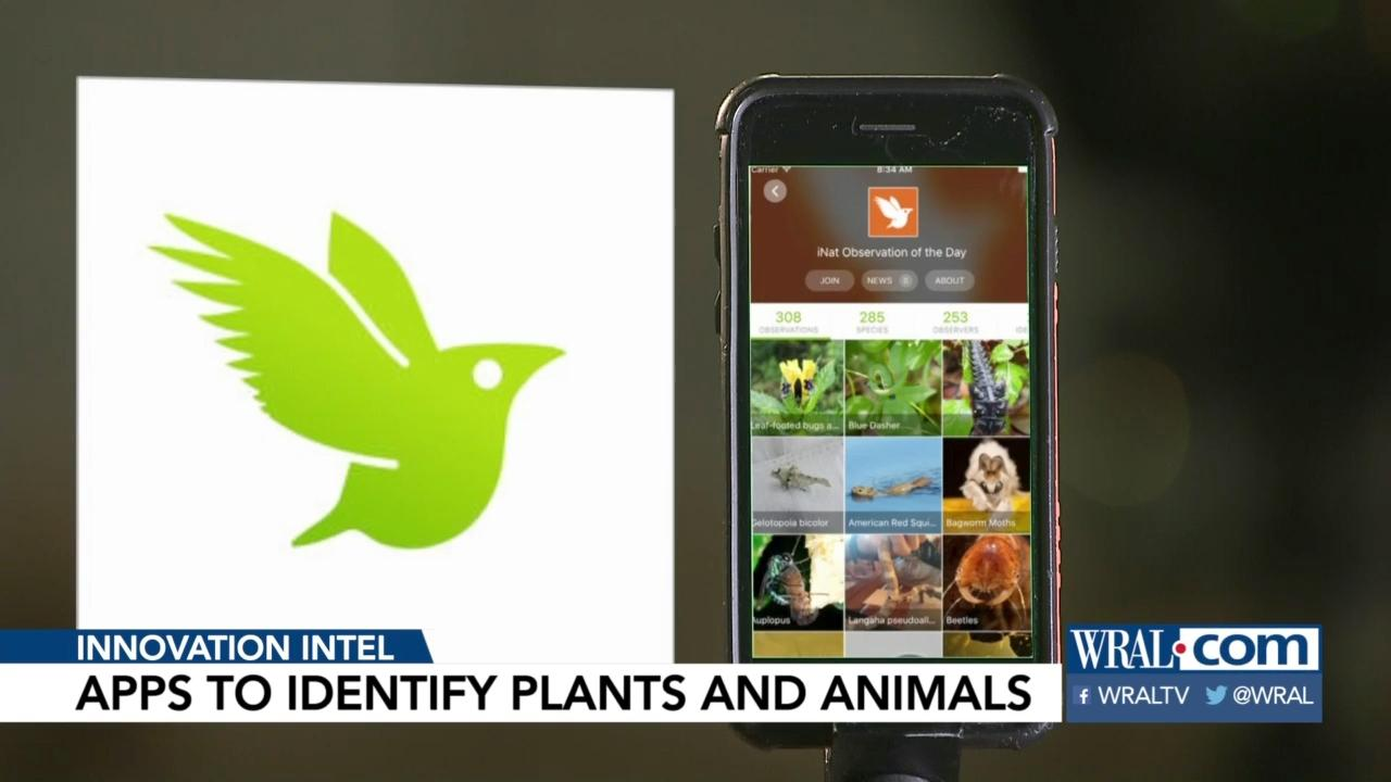 Apps to help you ID plants and animals outside :: WRAL com