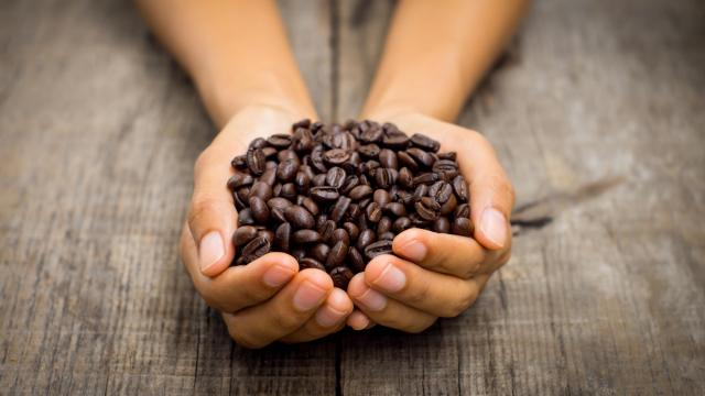 In order to understand coffee's economic value chain, it's important to understand the process each bean needs to go through in order to become the final product for the drinker. (Deseret Photo)