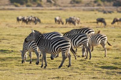 In East Africa, native tour guides have formed an organization that is transforming the future of African wildlife and Kenyan safari travel. (Deseret Photo)