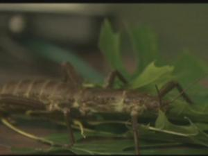 BugFest runs all day Saturday at the N.C. Museum of Natural Sciences!