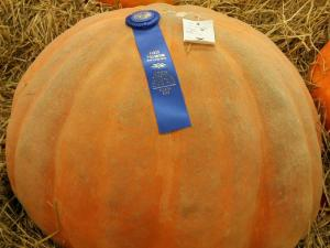 Fairgoers flock to see pumpkins of unusual proportions.