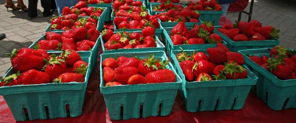 Ball Berries & Produce, on Rock Service Station Road in southern Wake County