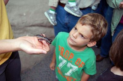 This bug emits a vinegar smell to ward off predators.