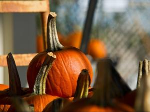 Pumpkins are ready for carving at Ken's Produce in Garner on Oct. 15, 2011.