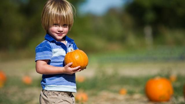 Two-year-old Ethan finds the perfect size pumpkin at Smith's Nursery in Benson on Oct. 15, 2011.