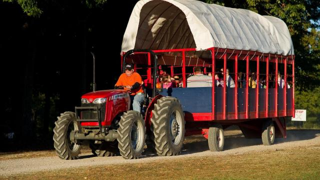 Families return from the pumpkin patch at Hill Ridge Farms in Youngsville on October 15, 2011.