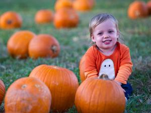 19-month-old Mollie is all smiles in the pumpkin patch at Hill Ridge Farms in Youngsville on October 15, 2011.