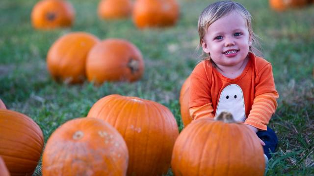 raleigh triangle pumpkin patches haunted trails corn mazes fall fun - Halloween Express Raleigh