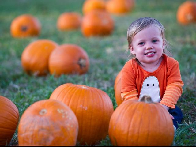 19-month-old Mollie is all smiles in the pumpkin patch at Hill Ridge Farms in Youngsville on October 15, 2011.<br/>Photographer: Scott Clevenger