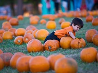 Kids look for just the right pumpkin at Hill Ridge Farms in Youngsville on October 15, 2011.