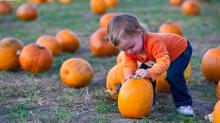IMAGE: Make fall fun, Halloween plans with Go Ask Mom's database