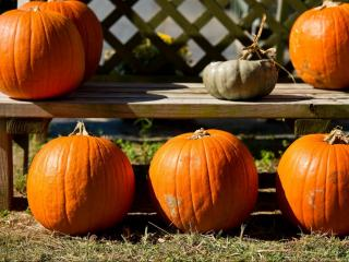 Pumpkins are on display and for sale at Smith's Nursery in Benson on October 15, 2011.