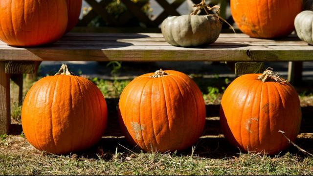 Pumpkin_Farms_10-15-11-03