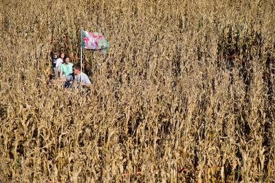 People wind their way through the corn at Ken's Korny Corn Maze in Garner on October 15, 2011.