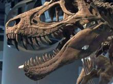 NC science museum's new wing opens in three weeks