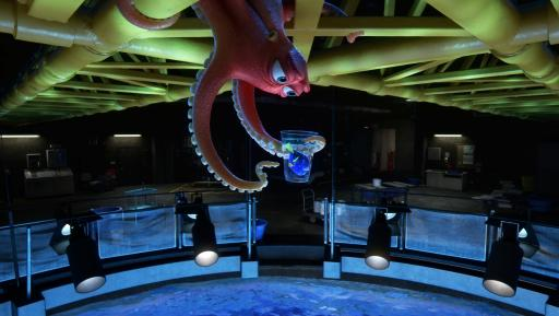 """FINDING DORY –Hank is an octopus—or actually a """"septopus"""": he lost a tentacle—along with his sense of humor—somewhere along the way. When Dory finds herself at the Marine Life Institute, a rehabilitation center and aquarium, Hank reluctantly agrees to help her navigate the massive facility. Directed by Andrew Stanton, """"Finding Dory"""" opens on June 17, 2016. ©2016 Disney•Pixar. All Rights Reserved. (Deseret Photo)"""