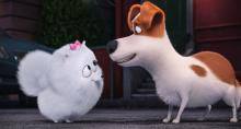 "Gidget (Jenny Slate) is a naïve-but-gutsy Pomeranian and Max (Louis C.K.) is a pampered terrier mix in Illumination Entertainment and Universal Pictures' ""The Secret Life of Pets,"" a comedy about the lives our pets lead after we leave for work or school each day. (Deseret Photo)"