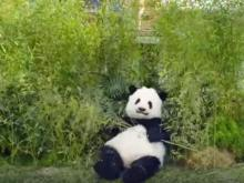 "GoDaddy: ""Sneezing Panda"" and ""Roomba Cats"" ads"