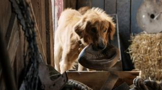 "Bailey finds his flip in ""A Dog's Purpose."" (Deseret Photo)"