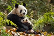 IMAGES: Disney Nature's 'Born in China' is a fun and informative nature doc for kids