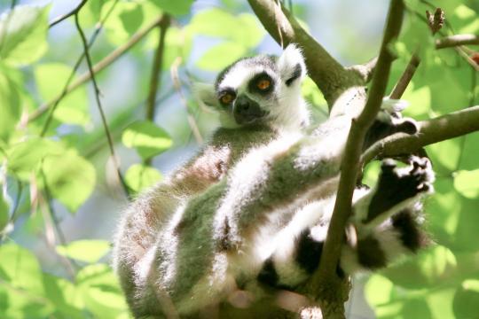 Duke Lemur Center hosts Earth Day open house