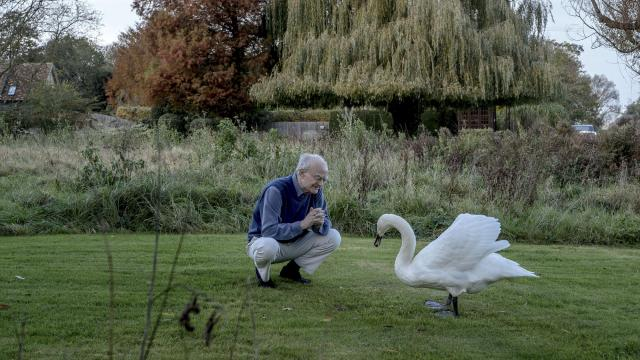 """Composer John Rutter feeds a swan from the nearby Ouse River, at his home in Hemingford Abbots, England, Nov. 10, 2017. Rutter is widely known for his carols, but his large-scale choral works — the """"Gloria"""" (1974), """"Requiem"""" (1985), """"Magnificat"""" (1990) and """"Mass of the Children"""" (2003) — are also performed everywhere, especially in the U.S. (Andrew Testa/The New York Times)"""
