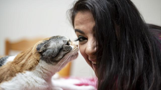 """Maysoon Zayid, a Muslim stand-up comedian who has cerebral palsy, with her cat at her home in Edgewater, N.J., Sept. 12, 2018. She has a development deal with ABC to create a semi-autographical sitcom called """"Can-Can,"""" which, if it makes it to air, could push two populations, one widely ignored, the other demonized, from the country's margins into the mainstream. """"I want to get out there and be the image of the American you don't think is American, and the Muslim you don't think of when you think of a Muslim,"""" she said. (Karsten Moran/The New York Times)"""