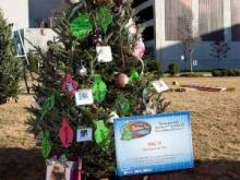 Safe Haven for Cats winning tree