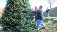 IMAGES: A post-Thanksgiving tradition: Picking the perfect tree