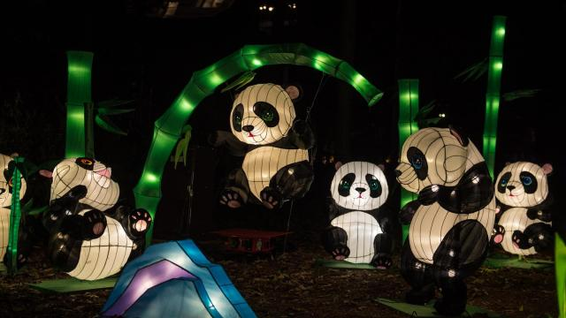 North Carolina Chinese Lantern Festival - Koka Booth Amphitheart