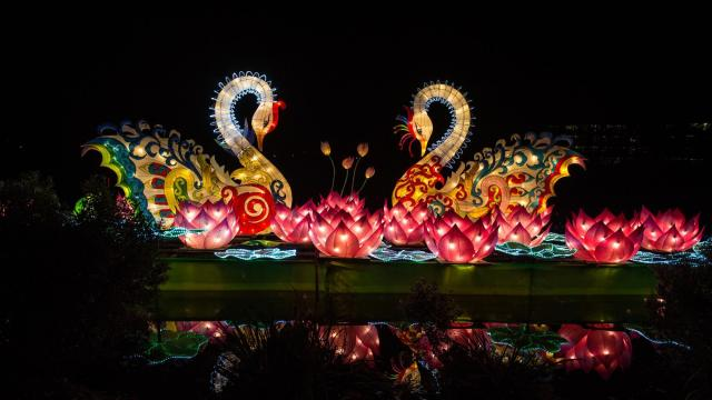 North Carolina Chinese Lantern Festival - Koka Booth Amphitheart