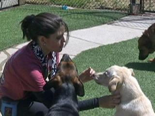 WRAL reporter Tara Lynn and some dogs at the Wake County SPCA.