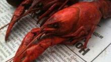 IMAGE: Craving crawfish? Battistella's has got your fix