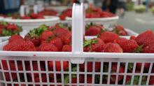 IMAGES: Holly Springs Farmers Market