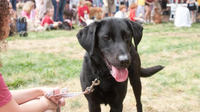 Humans and pets alike enjoyed the contests after the SPCA Walk in downtown Raleigh.