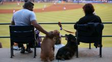 IMAGES: The week ahead: Natural Selections, Bark in the Park