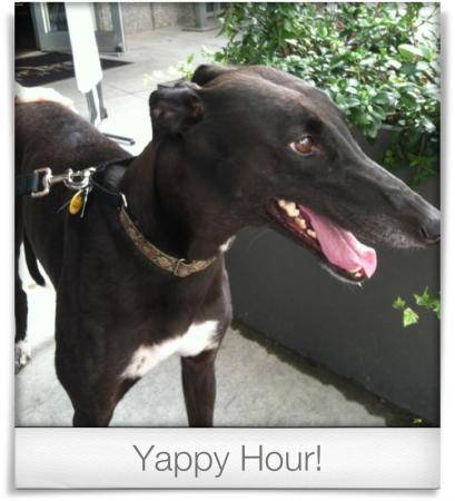 Taken at World Of Beers.  Comment: Yappy Hour!