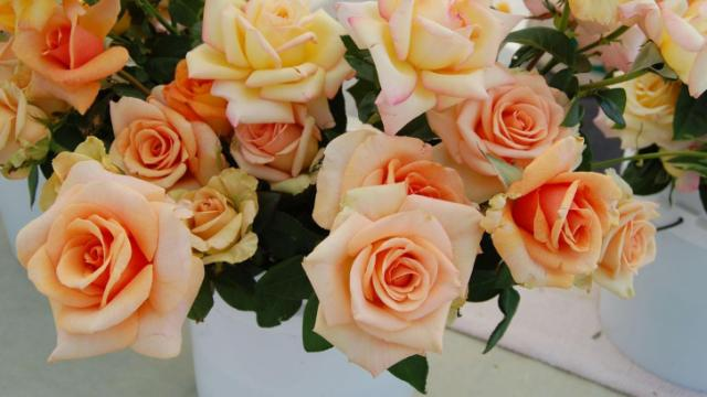 Stager's Fresh Cut Garden Roses offered these flowers during the Raleigh Downtown Farmer's Market.