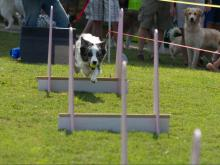 AKC Responsible Pet Owner Day