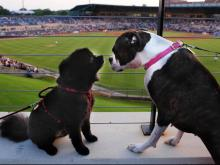 "See cute pets from ""Bark in the Park,"" a biannual event held by the Durham Bulls Wednesday, June 19, 2013."