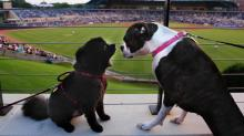 IMAGES: 6/13: Durham Bulls: Bark in the Park