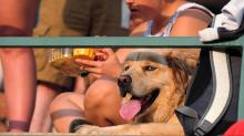 IMAGE: How to protect dogs in intense heat