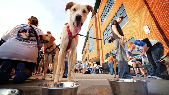 Copper, a Labrador-Whippet mix, looks for a drink of water while hanging out with his owner David Johnston of Raleigh during Bark in the Park night at the Durham Bulls Athletic Park Wednesday, June 19, 2013. It was the second time this season the Bulls worked with Second Chance Pet Adoptions to raise money for the no-kill animal shelter.  (Photo by Jeffrey A. Camarati)