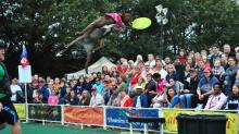 IMAGES: Photos: K9s fly high at State Fair